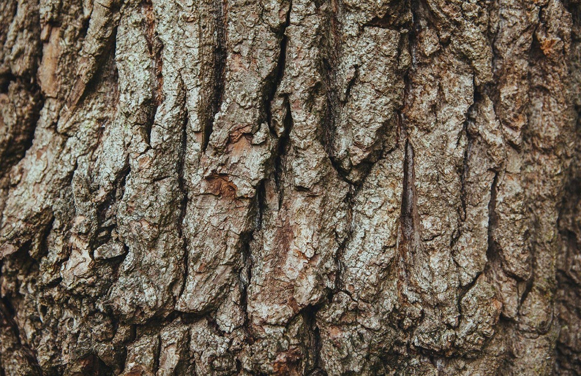texture naturali